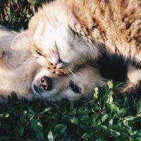 Tips para adaptar un mueble para tu mascota