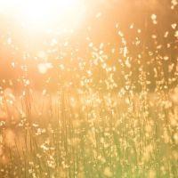 Tejas fotovoltaicas en casa: Ventajas e inconvenientes
